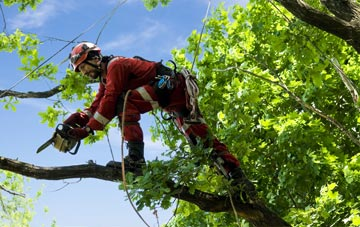 find trusted rated Neath Port Talbot tree surgeons