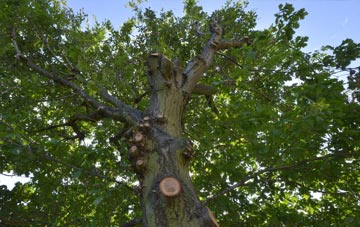what is Neath Port Talbot tree surgery?